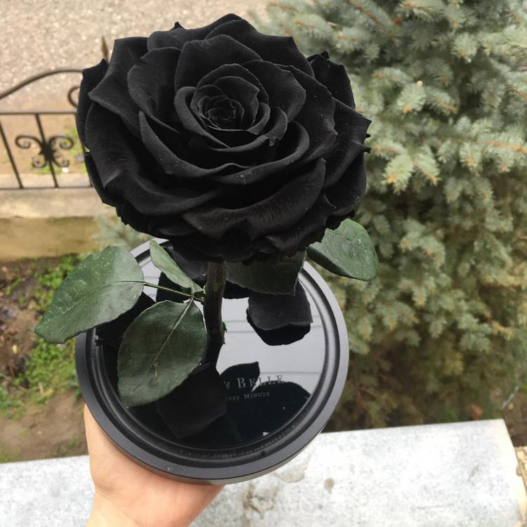черная роза натуральная черная роза