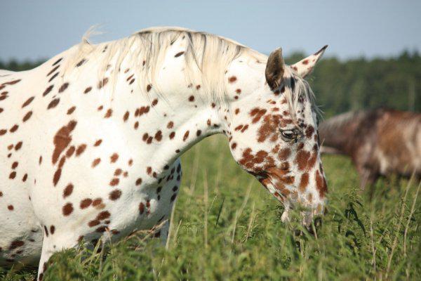 самый красивый окрас лошадей