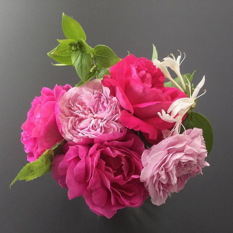 роза поль нейрон розовые розы