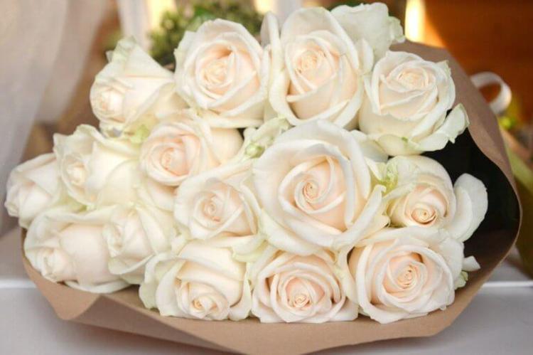 розы венделла белые розы