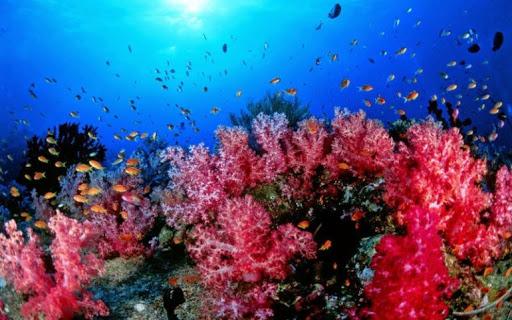 самое чистое море в мире