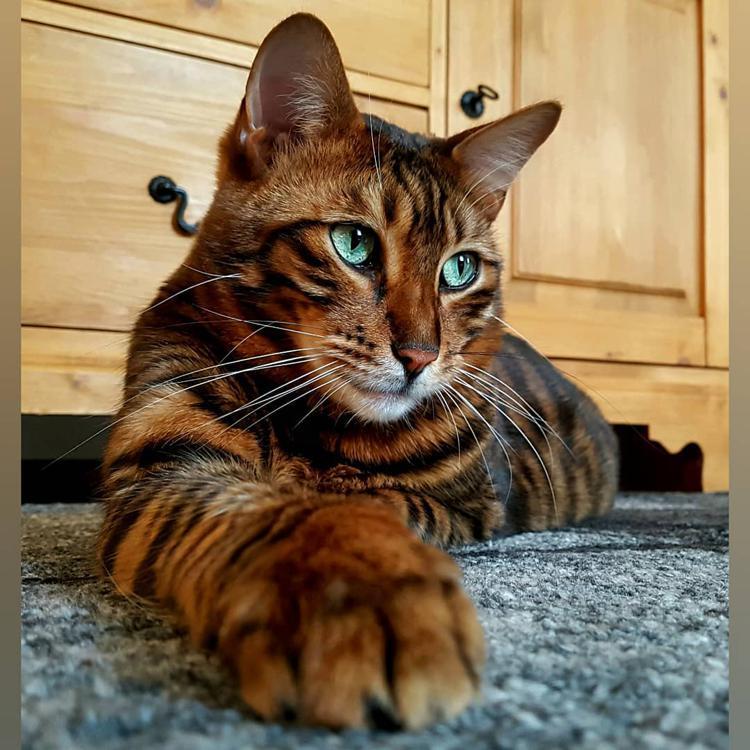 спаянность объяснялась коты редких пород фото разных местах